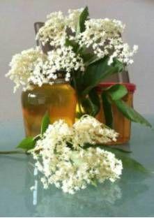 Gelée de fleurs de sureau
