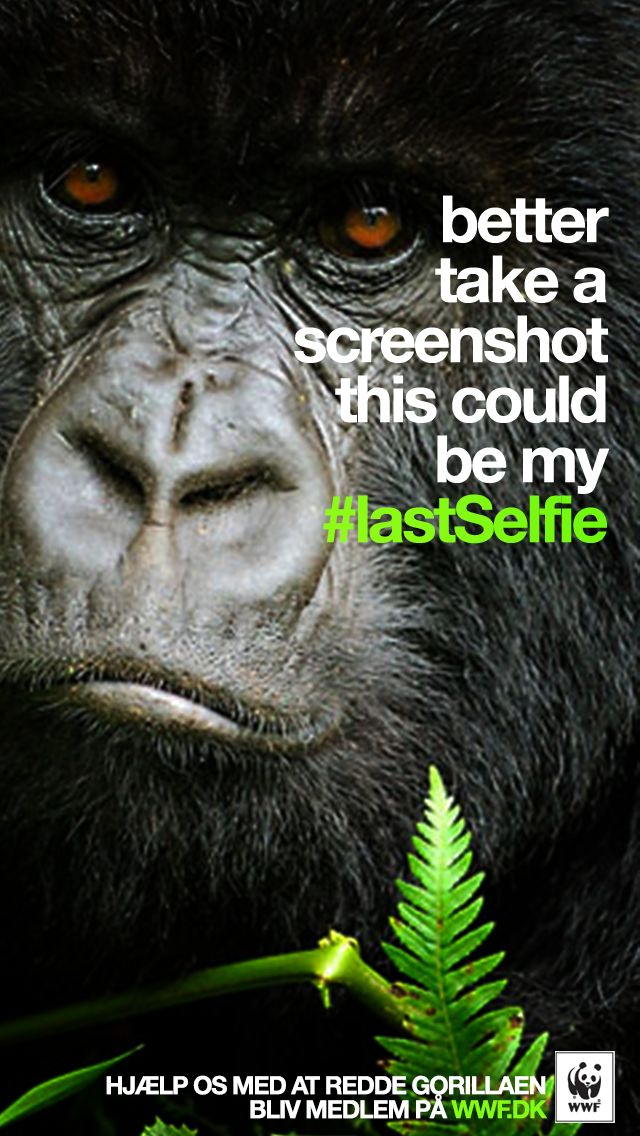 WWF Denmark / Turkey: #LastSelfie, Gorilla