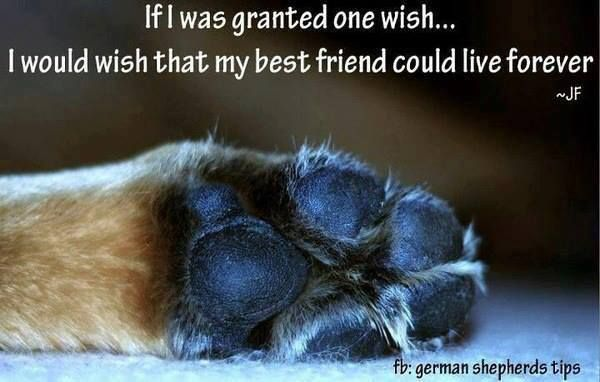 I wish that my best friend could live forever