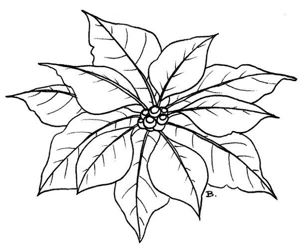 It is an image of Simplicity Poinsetta Coloring Page