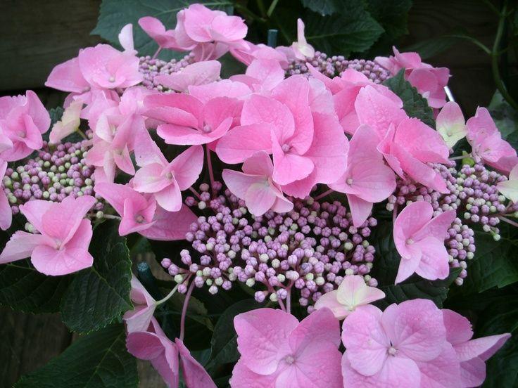 Pretty Flower Arrangements 19 best pretty arrangements images on pinterest | flower