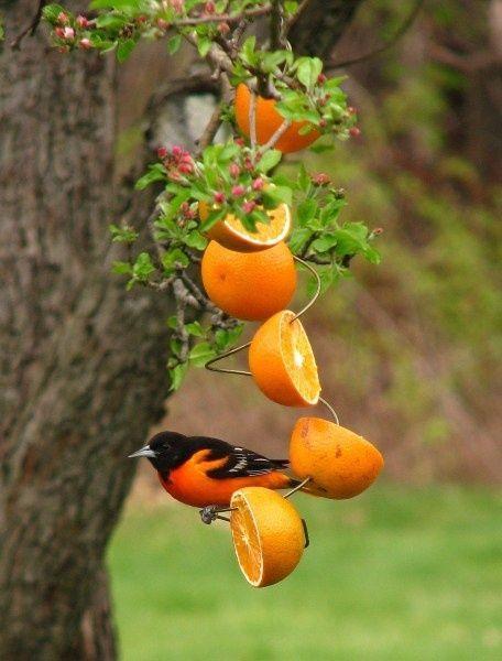 DIY- Birdfeeder Idea