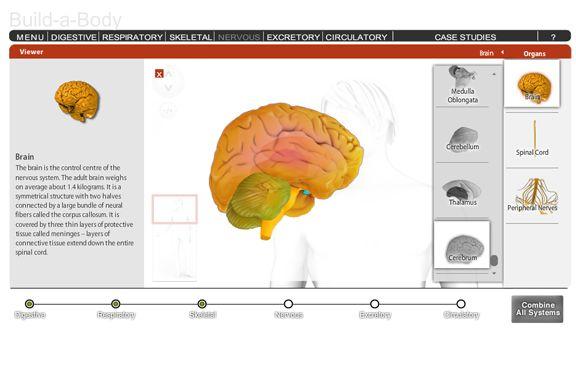 7 best Unit 5 Human Biology images on Pinterest | Ap biology ...