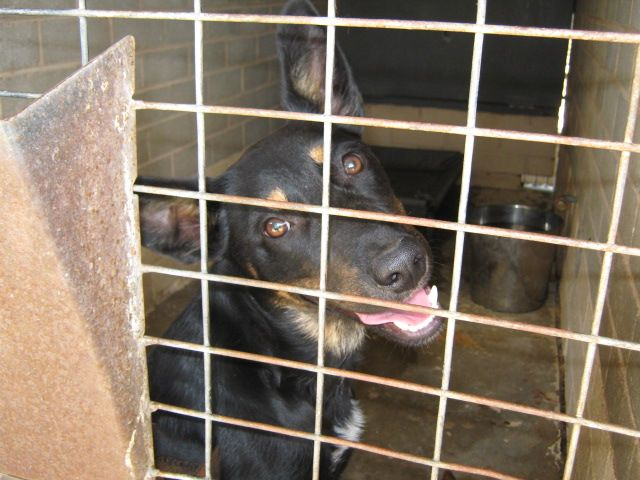 Gallery of council pounds and their impounded animals - Rescue Rex NSW AUSTRALIA