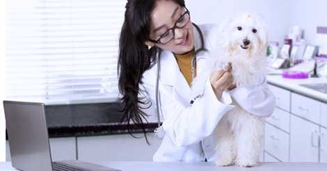 Pet Insurance That Covers Preexisting Conditions Embrace Pet