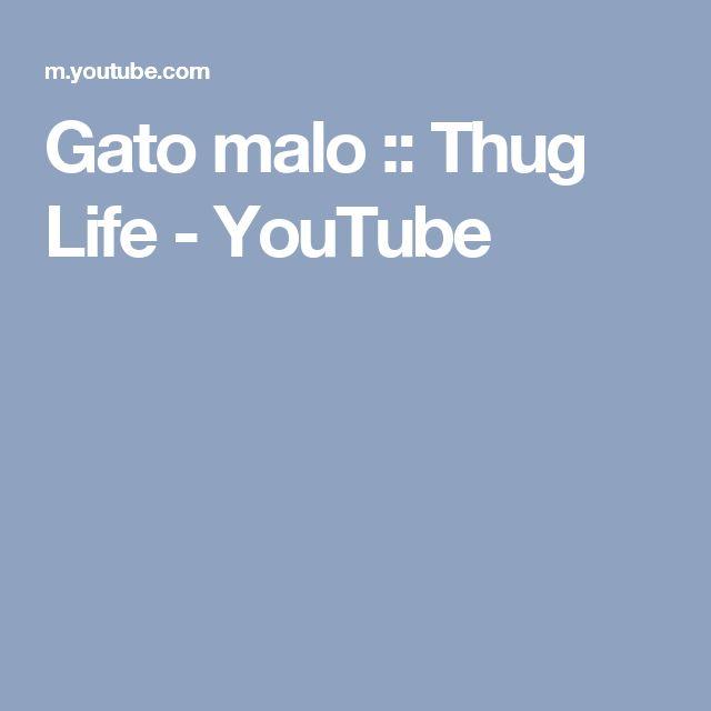 Gato malo :: Thug Life - YouTube