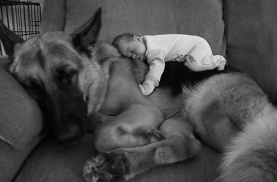 big dogs with kids