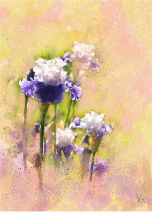 Alberto Guillen Flower Paintings-AmO Images-AmO Images