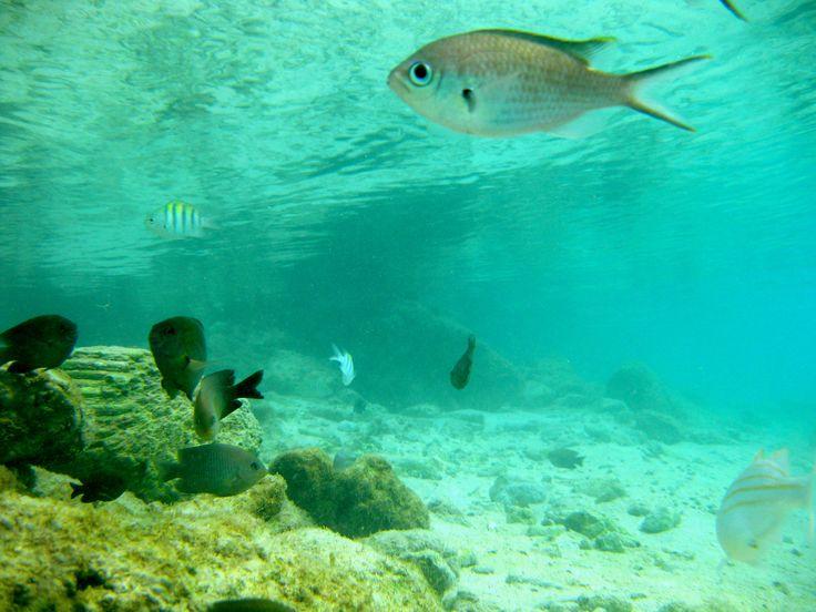 Koraalvisjes, gefotografeerd op Curacao