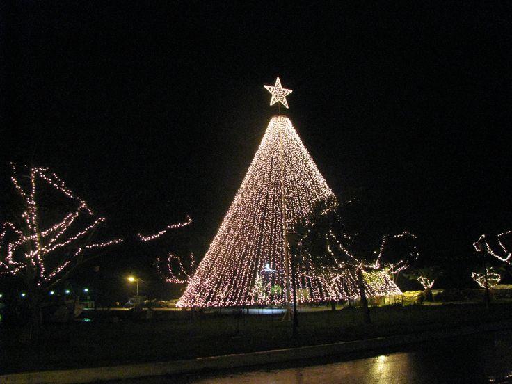 the christmas tree. pefki-evia photo by maria koulouri
