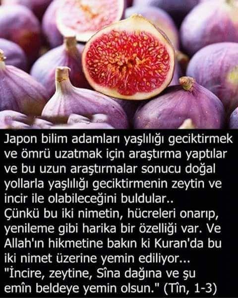 İncirin Faydaları..@saglikhaberleri