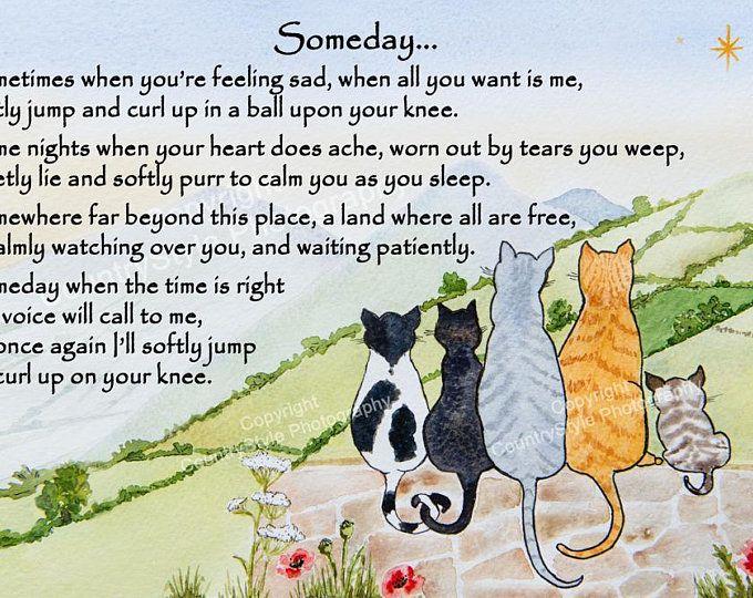 Cat Memorial Pet Loss Bereavement Rainbow Bridge Fridge Magnet Etsy Cat Memorial Rainbow Bridge Pet Loss