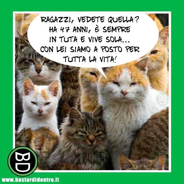 animali, gatti, gattara, famiglia