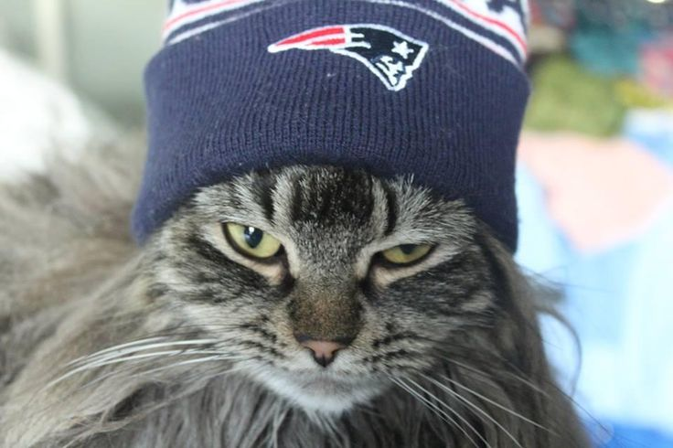 Submit a photo of your 4-legged Patriots fan & it could be the next PETriot of the Month! Check out the PETriot tab on the Patriots Facebook page for full rules & to submit a photo, or use #PETriot on Twitter or Instagram.