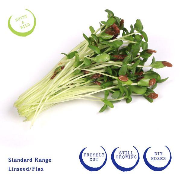 Linseed/ Flax microgreens. http://corsica.co.za/