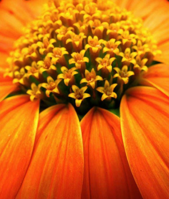 Wedding Flower Meanings With 32 Macro Flower Photography Inspiration