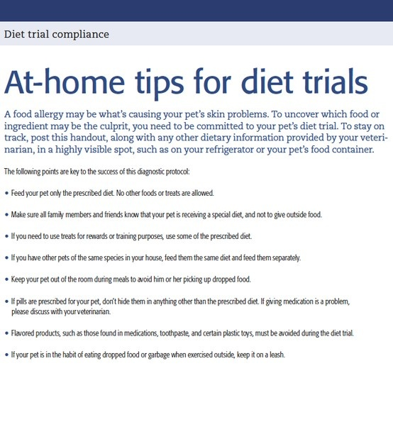 Veterinary client handout: At-home diet trial compliance handout - Download this PDF and use it in your veterinary practice - dvm360