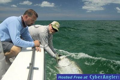 CyberAngler Photo Gallery - Doug Forde's Sarasota tarpon - with Capt. Rick Grassett