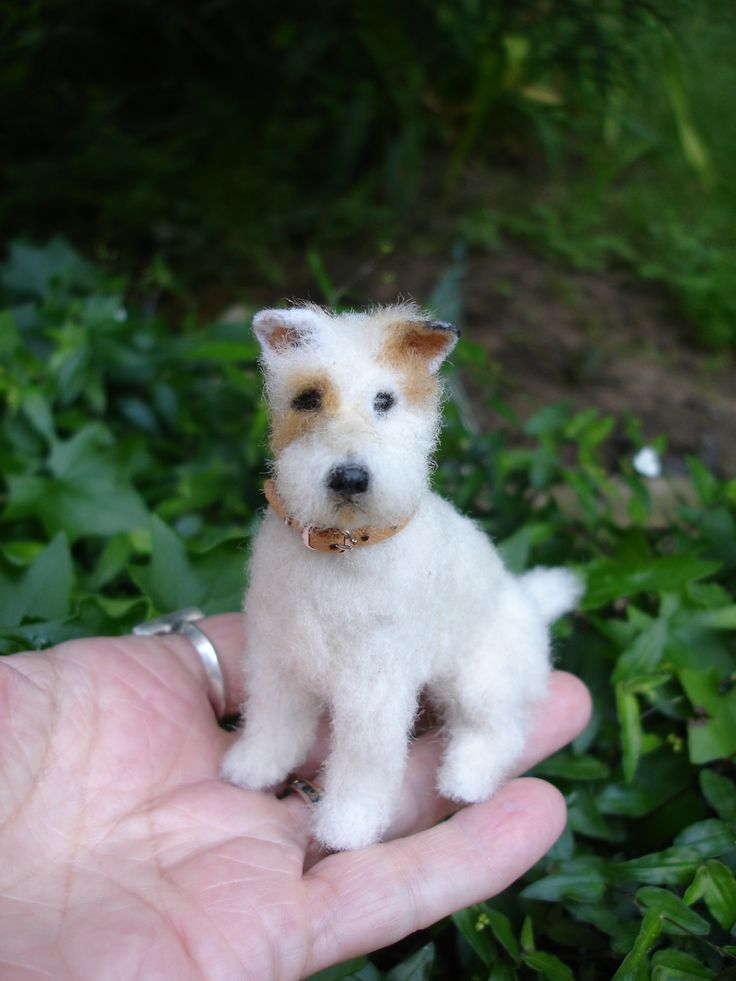 Mini Wire Terrier