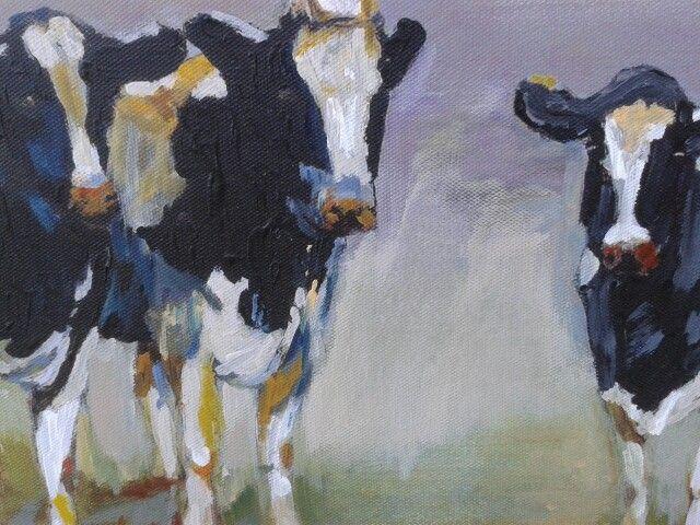 Koeien, nieuwsgierig