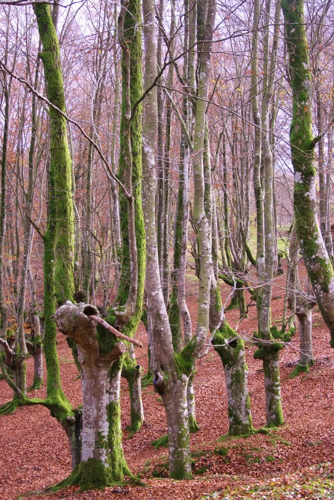 Urkiola  Pais  Vasco (Basque Country, Spain) - can you see the little people with their arms outstretched??