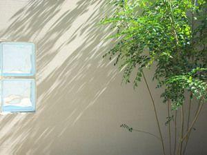 人気のシンボルツリー - 庭木で開運 自分でできる簡単な剪定