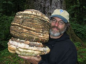 Paul Stamets. Mycological pioneer. This guy holds some of the keys to a healthy future for our planet. Definitely a hero.