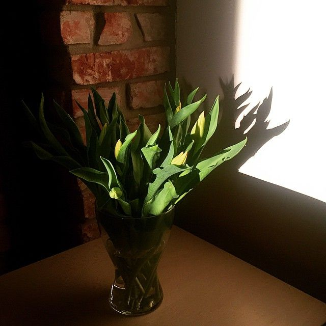 Fotogeniczne te moje tulipany. #tulips #sunset #shadow #spring