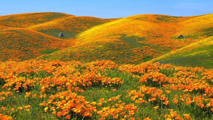 Landscape with organge flowers