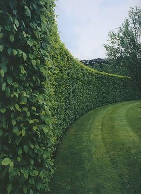 NICE hedge. Love the leaves too.