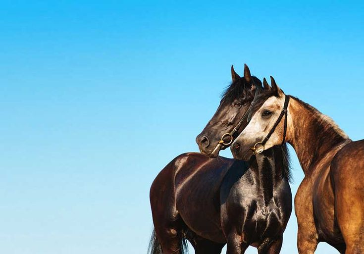 OUTDATED — Plea to Help Find Homes for 52 Thoroughbred Horses