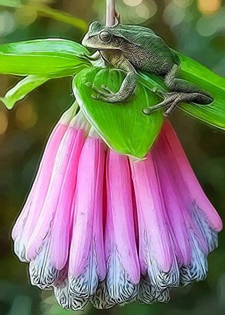 Zöld béka pink virágon