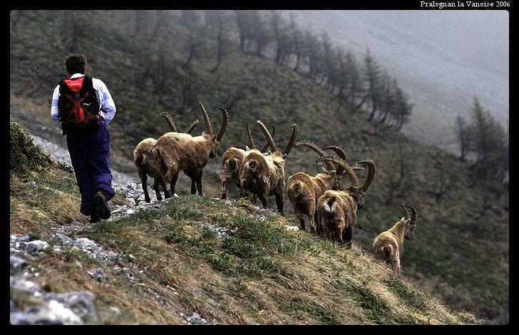 photo E. Langer randonnée en Vanoise avec les accompagnateurs en montagne. Venez découvrir ce monde merveilleux à Pralognan la Vanoise