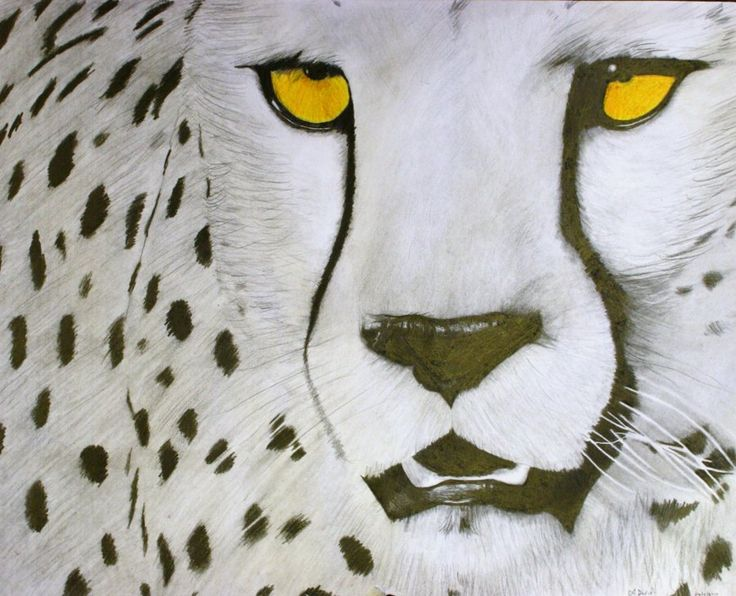 an introduction to cheetahs the fastest of felines The world's fastest cat he world's fastest land animal is the cheetah and how it can run up to 70 mph however, did you know feline fun cheetah facts.