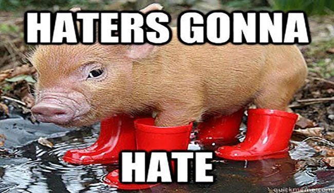 15 Very Funny Pig Memes
