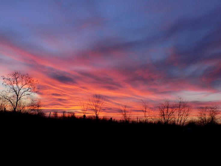 Wildelife sunset