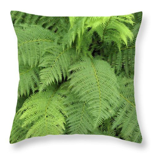 """Soft Ferns Throw Pillow by Sverre Andreas Fekjan.  Our throw pillows are made from 100% spun polyester poplin fabric and add a stylish statement to any room.  Pillows are available in sizes from 14"""" x 14"""" up to 26"""" x 26"""".  Each pillow is printed on both sides (same image) and includes a concealed zipper and removable insert (if selected) for easy cleaning."""