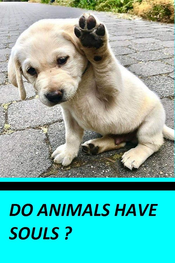 Do Animals Have Souls | animal's lol | Pets, Dogs, Animals
