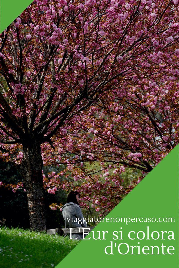 Approda nella Città Eterna la festa primaverile dei ciliegi in fiore, la celebrazione giapponese con il nome di Hanami (花見), la contemplazione dei fiori.