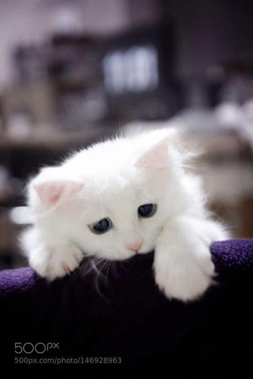 Photo - Google+ Beautiful blue eyes