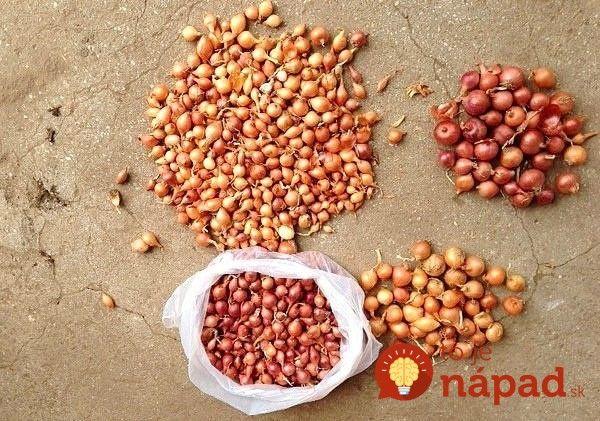 Keď budete sadiť cibuľu, spomeňte si na túto radu: Držte sa jej a budete mať úrodu ako nikdy!