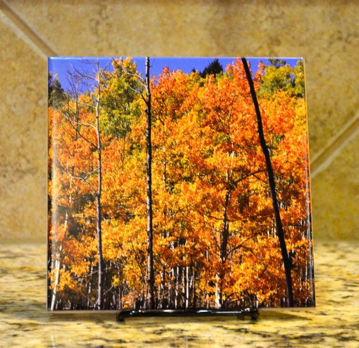 Fall Foliage Ceramic Trivet - Photograph of Golden Aspen Trees - Santa Fe Vista - Southwestern Art - Functional Art  comes with a stand by JoAnneTuckerArt for 20.00 USD