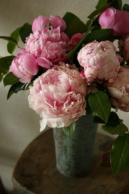 peonies and English roses