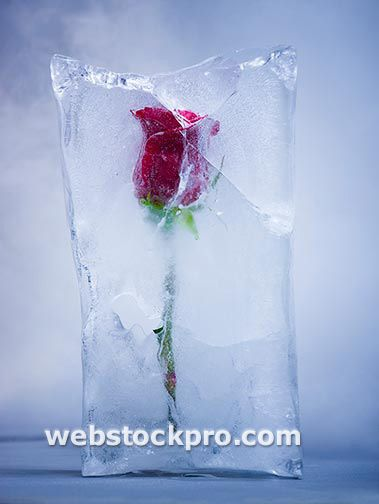 Red rose frozen in a block of ice. It had a light at the bottom which made it glow and it melted slowly throughout the day gradually revealing the rose. Makes me think of Beauty and the Beast.