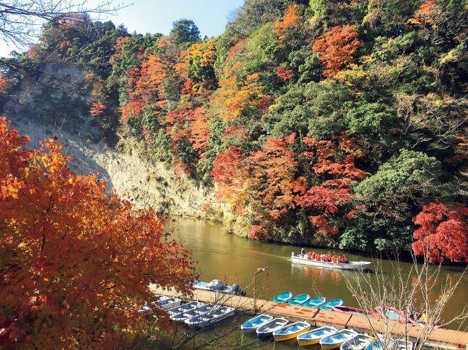 絶景スポット満載!乗り物から楽しむパノラマ紅葉【関東】