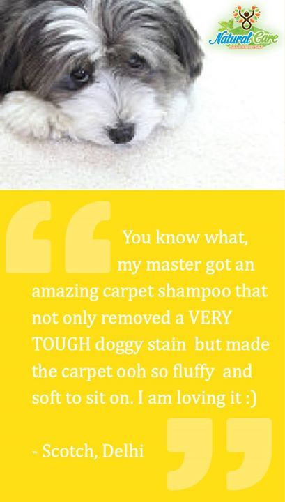 #pets #stains #carpets #cleaning #Shampoo #fluffy #glowing