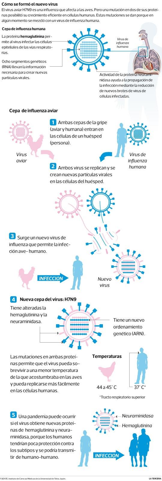 Estudio dice que nueva gripe H7N9 se adapta a humanos. El 31 de marzo pasado, en China se informó del primer contagiado. A la fecha van 60 y 10 muertos.