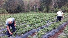 Organik ve iyi tarım destekleme ödemelerine başlandı