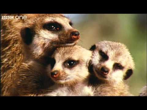 THIS IS FABULOUS PLEASE WATCH AND REPIN...What A Wonderful World With David Attenborough -- BBC One [FULL HD]