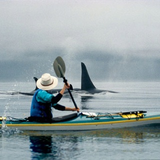Sea Kayaking with Orcas, Johnson Strait off Vancouver Island....This will be me soon!!!!